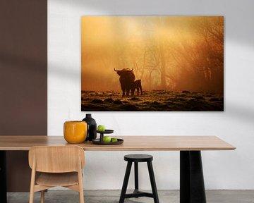 Koeien in de mist von Jeffrey Groeneweg