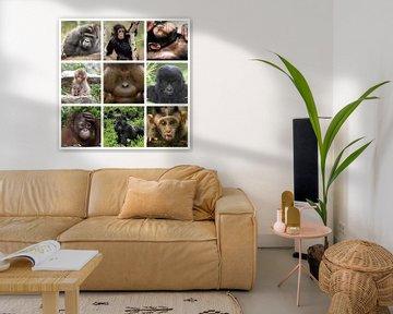 apen collage von Marja Hoebe