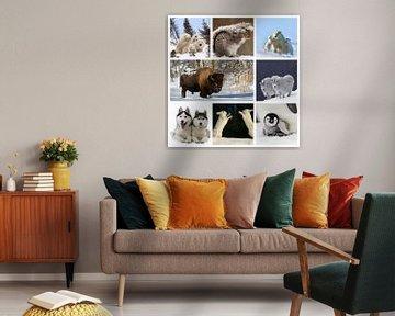 collage dieren in de sneeuw von Marja Hoebe