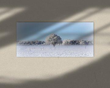 Witte wereld van Hanneke de Vries-Koning