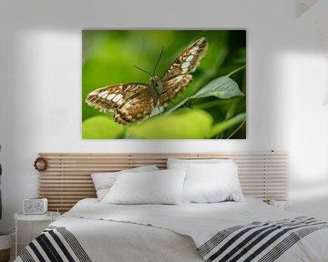 Brown-Schmetterling von Elbertsen Fotografie