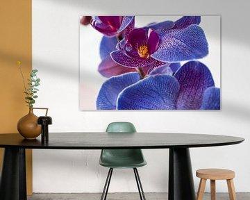 Blauwe orchidee van Rietje Bulthuis