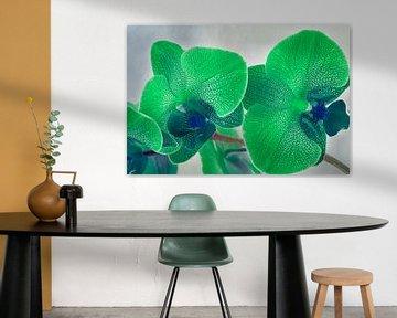 Groene gevlekte orchidee van Rietje Bulthuis