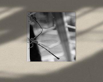 Libelle von Stefan  Nanninga