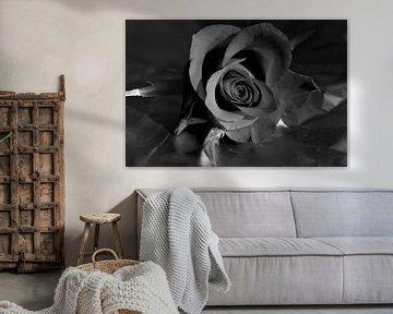 Rose in schwarz und weiss  von Gera Wijlens