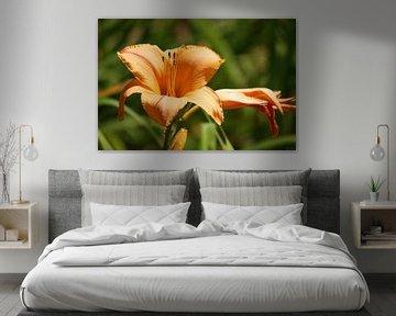 Fleur-de-lis van Meleah Fotografie