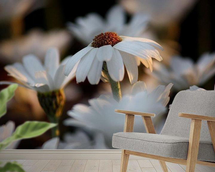 Impression: weiße Margheriten sur Meleah Fotografie