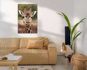 Giraffe van Bart van Dinten
