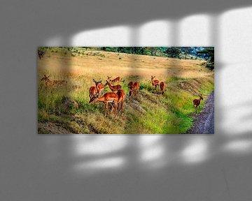 Herten in de Masai Mara van René Holtslag