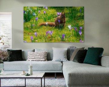 Eekhoorn in de Lente  von Jamie Lebbink