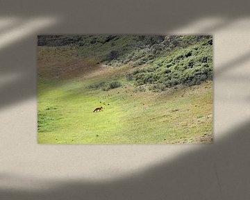 distant fox van Matthijs Lokers