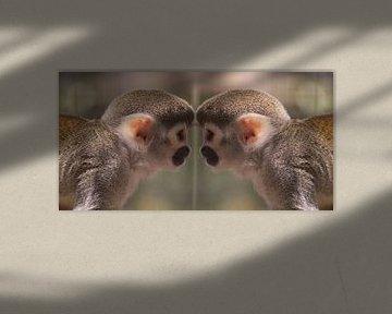Apen spiegel von Angelique van Heertum
