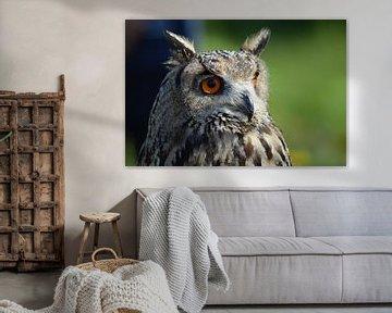Siberische Oehoe / Siberian eagle owl van Pascal Engelbarts