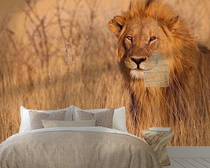 Sfeerimpressie behang: Lion looking right at you van Damien Franscoise