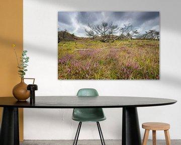 Heide in het duin bij Schoorl van Fotografie Egmond