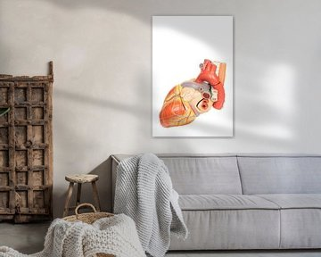 Model dat de binnenkant van een menselijk hart laat zien van Ben Schonewille