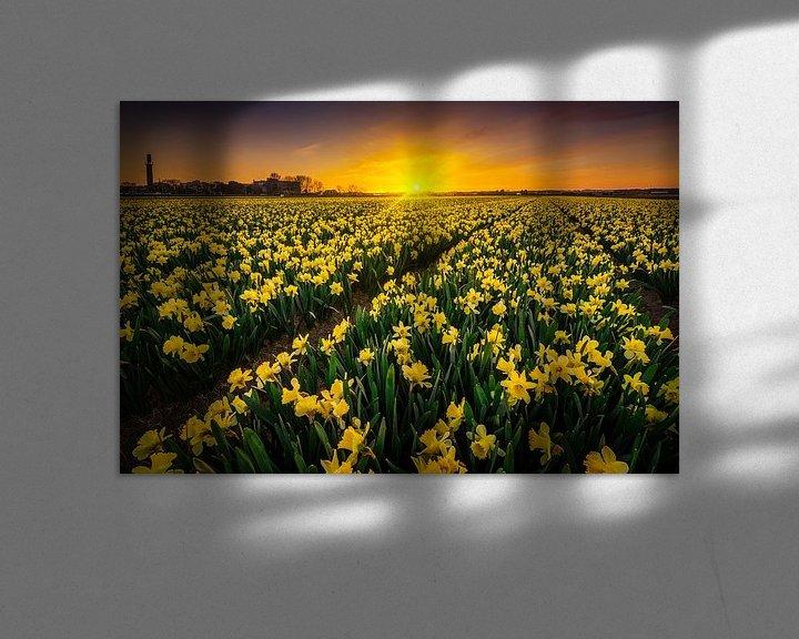 Sfeerimpressie: Narcis bloemenveld van Albert Dros