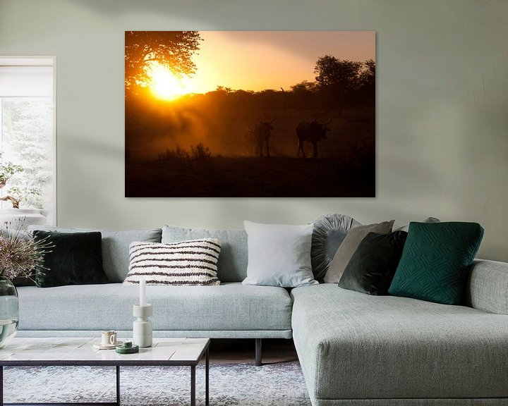 Sfeerimpressie: Cows in the last light van Damien Franscoise