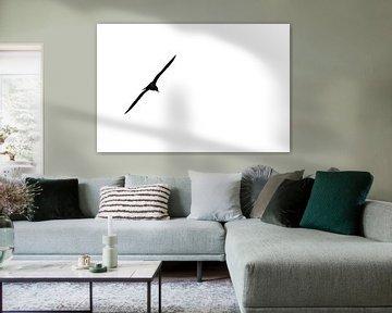 Vliegende meeuw silhouette van Jan Brons