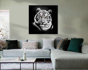Tigre Portait