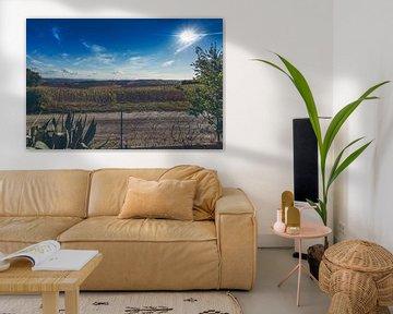 Uitgebloeide zonnebloemen van Erik Rudolfs