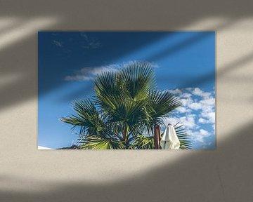 Palmboom aan de blauwe lucht van Erik Rudolfs