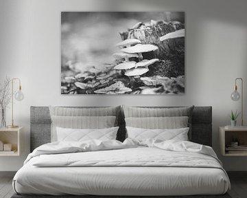 Champignons en noir et blanc de la lumière du soleil sur Chris Snoek