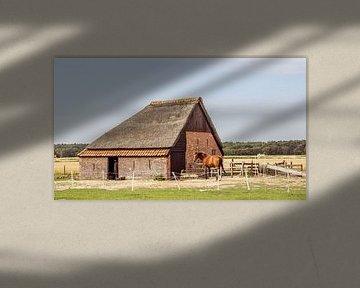 Schafstall auf Texel von Hilda Weges