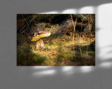 Herfst! Eekhoorntjesbrood. von Hilda Weges