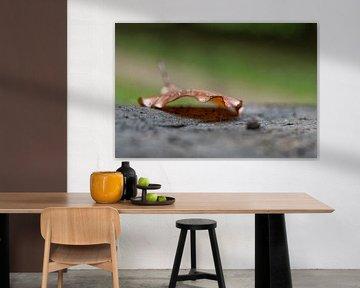 Herfstblad / Autumn Leaf van Jan Sportel Photography