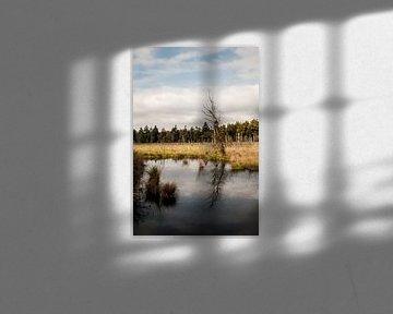 Plas in natuurgebied van Chris Tijsmans