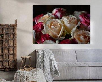 Rosen von Coosje Wennekes