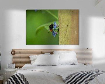Biene von Coosje Wennekes