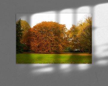 Herfst...Autumn