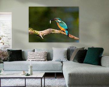 Kingfisher breakfast van Ursula Di Chito