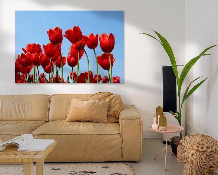 Impression: Tulpen sur Elly Damen