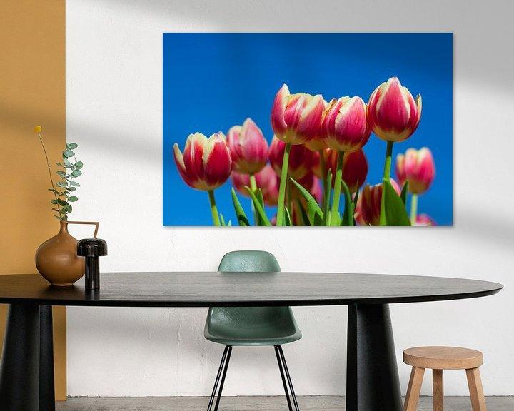 Sfeerimpressie: Tulpen van Elly Damen
