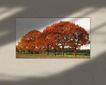 Herfst van Maja Smits