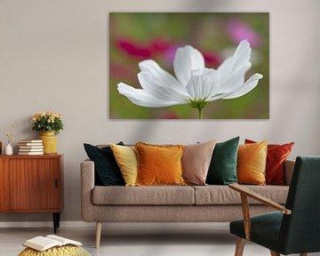 Weiße Anemone von Barbara Brolsma