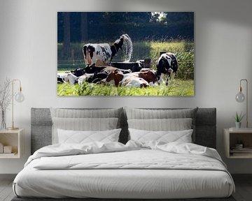 Kuh ist heiß von Jan Sportel Photography