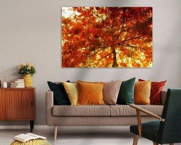 autumn tree van Yvonne Blokland