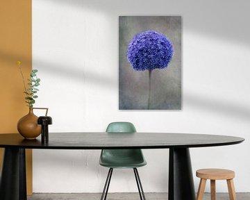 blauw Allium van Claudia Moeckel