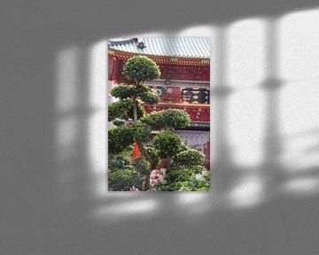 Bonsai met op de achtergrond Senso-ji sur Astrid Meulenberg