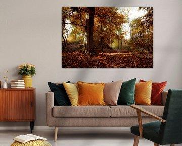 Prachtige herfstkleuren op de Vughtse Heide (Foto bekend van TV !) van Fotografie Jeronimo