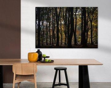 silhouetten in de herfst
