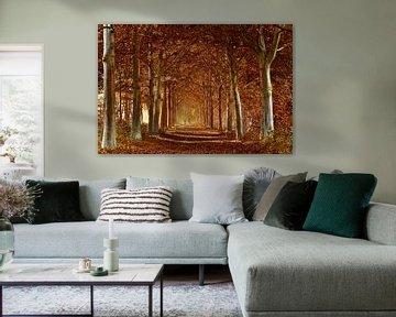 Herfstfoto in het bos  van Fotografie Jeronimo