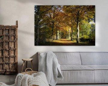 Herfstplaatje in het Roosendaalse natuurgebied Visdonk