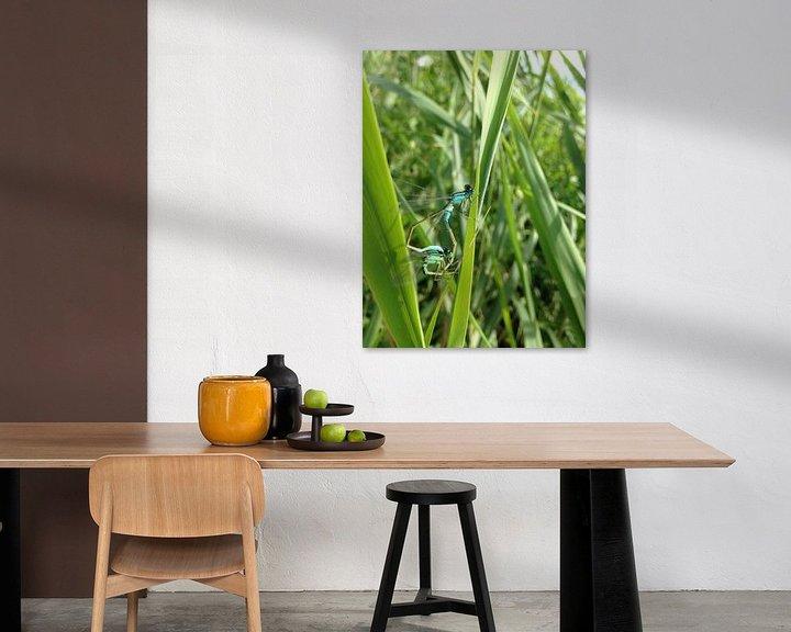 Beispiel: de prachtige libellen  von Gijs Van son