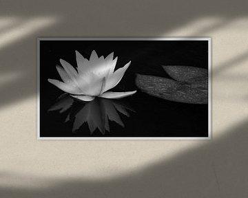 Waterlelie / in zwart-wit van Norbert Sülzner