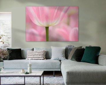 Tulpen in rose  Pink Tulips van Lucia Kerstens